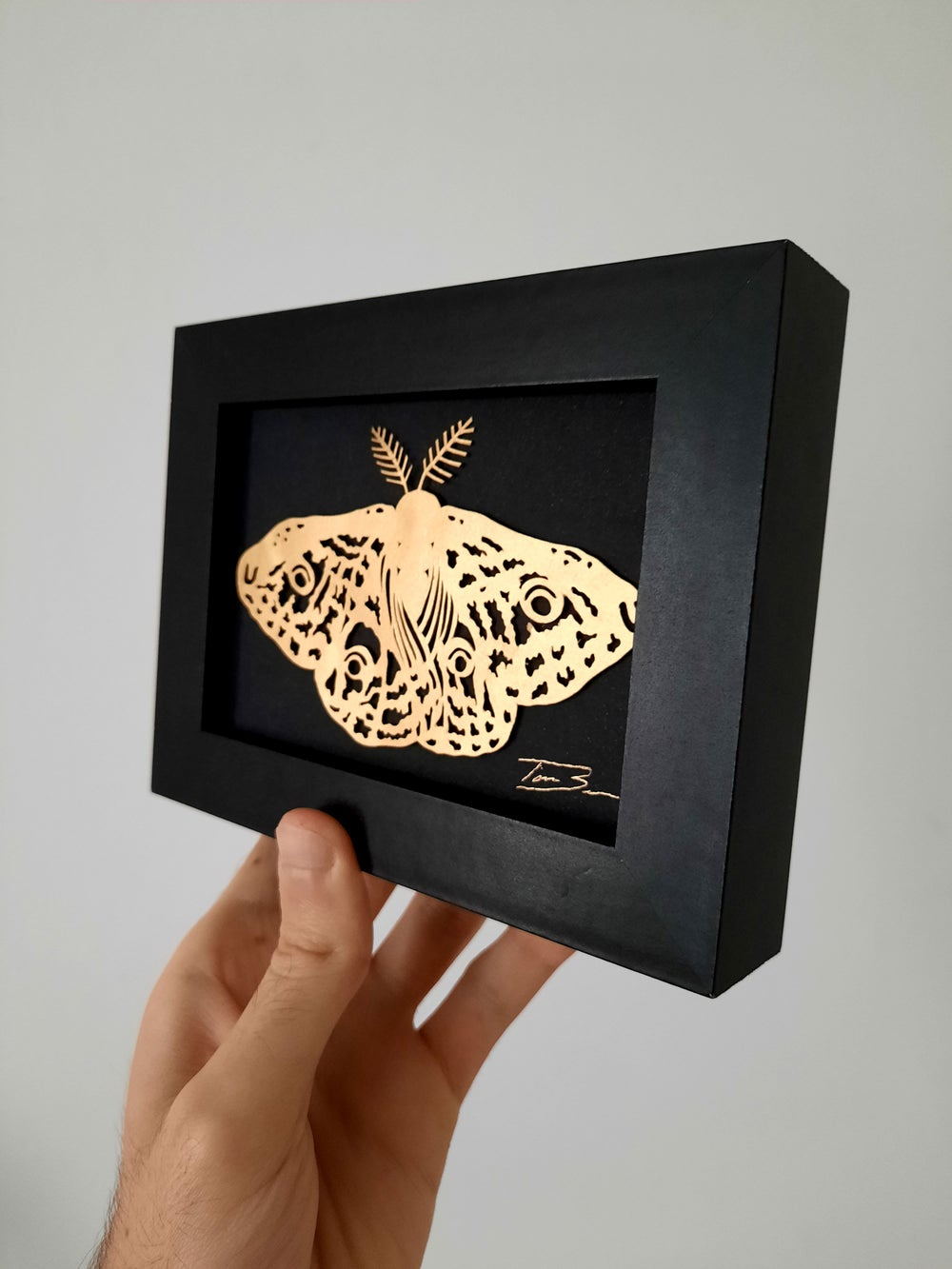 Image of Paper Cut Emperor Moth