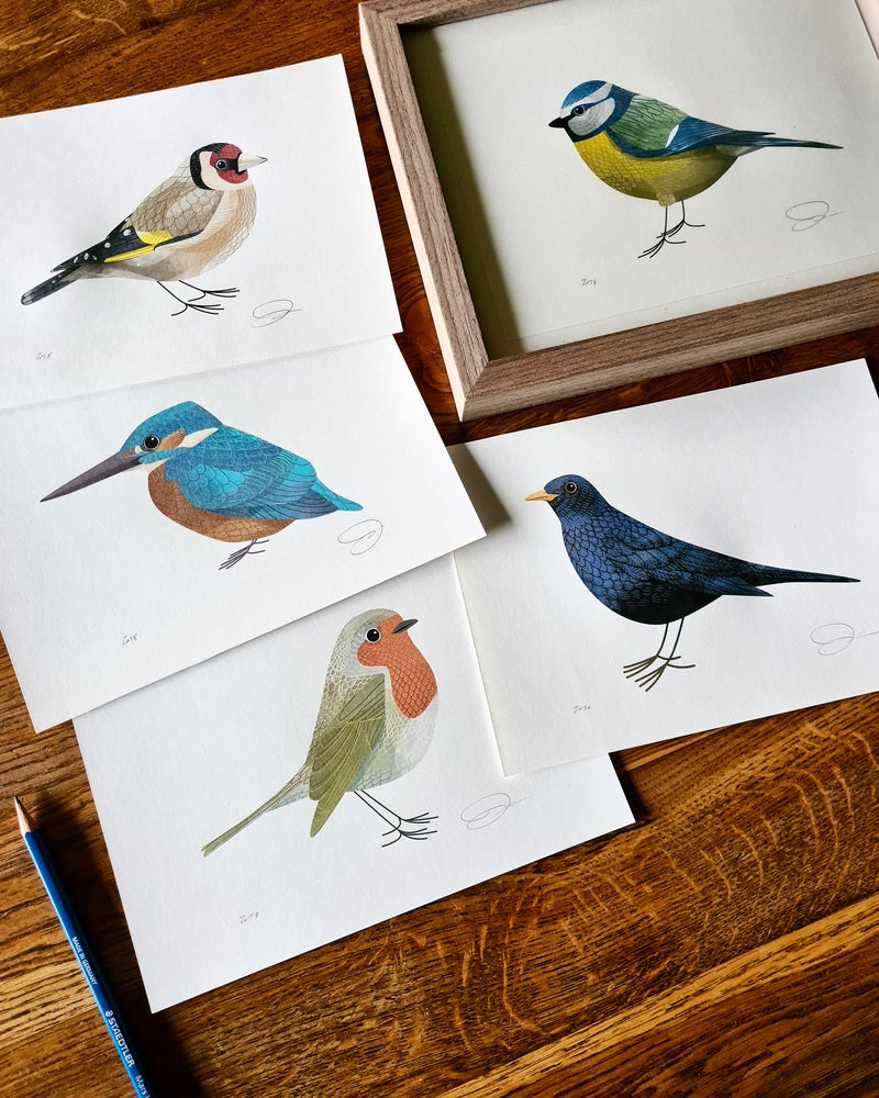 Image of Print Set: 5 Birds