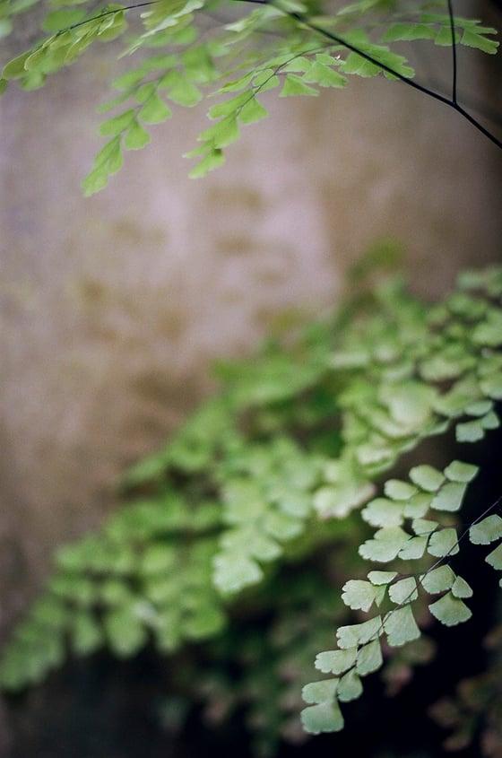 """Image of """"Garden"""""""