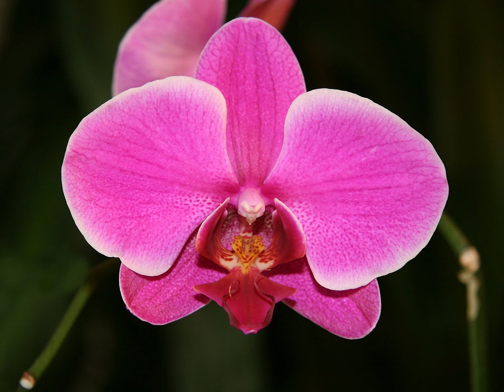 Image of Orchid Essence-Higher Communication