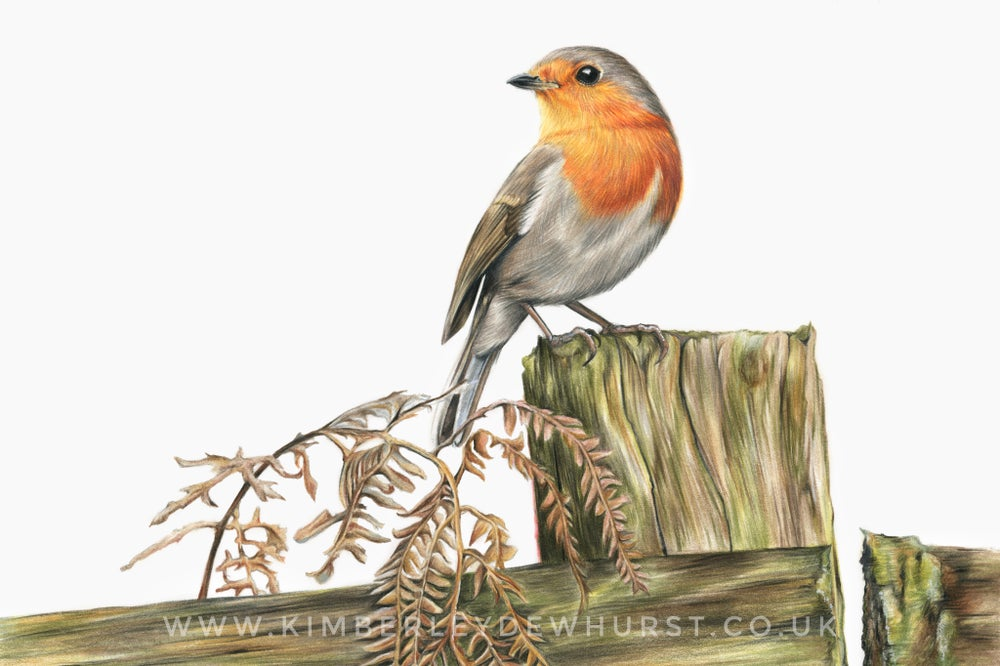 Image of 'Robin' Limited Edition Print
