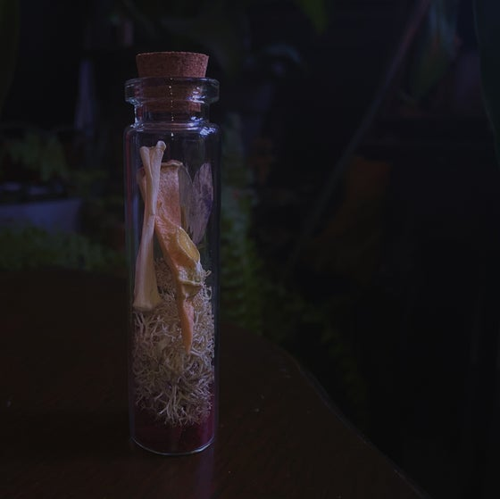 Image of SAMHAIN witch bottle / Apple & Moss