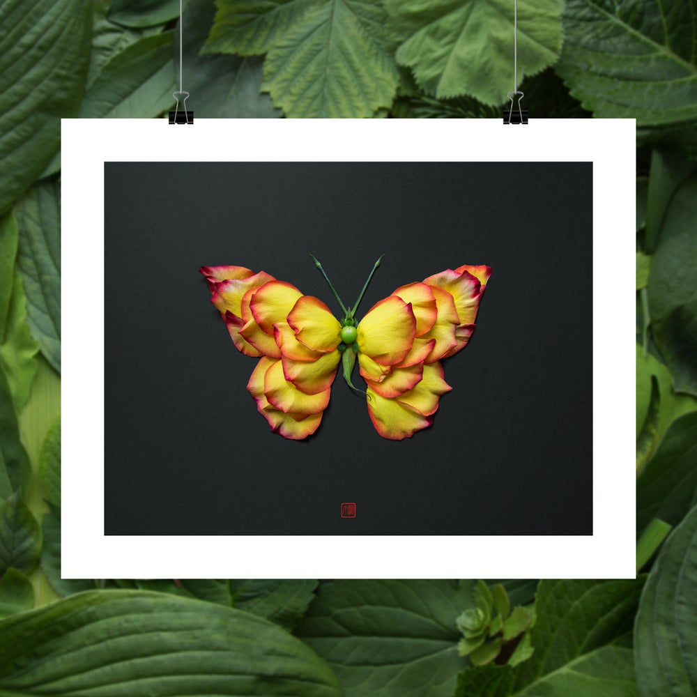 Image of Fine Art Print - Flame Butterfly