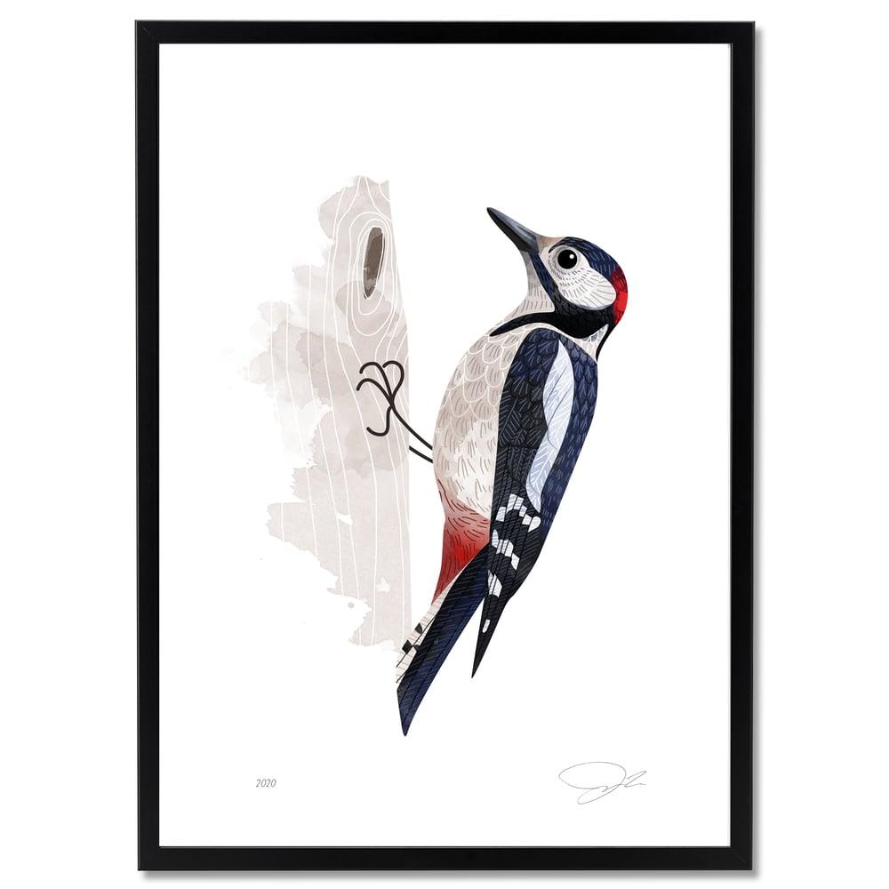 Image of Print: Woodpecker (Buntspecht)