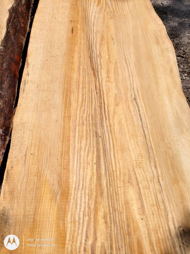 Image of (Sonderegger) Pine