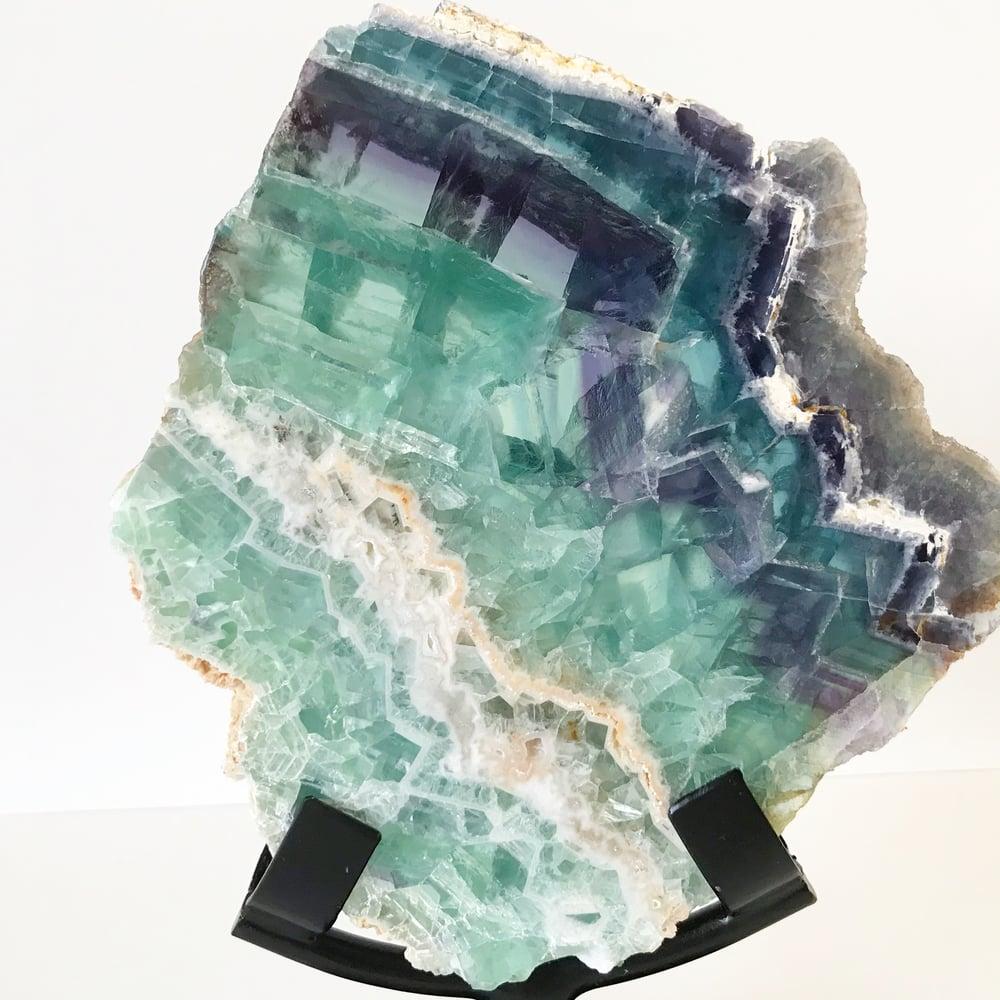 Image of Tricolor Fluorite no.155 + Matte Black Stand