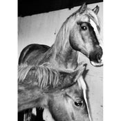 Image of VALERIE PHILLIPS HORSE SCREEN PRINT