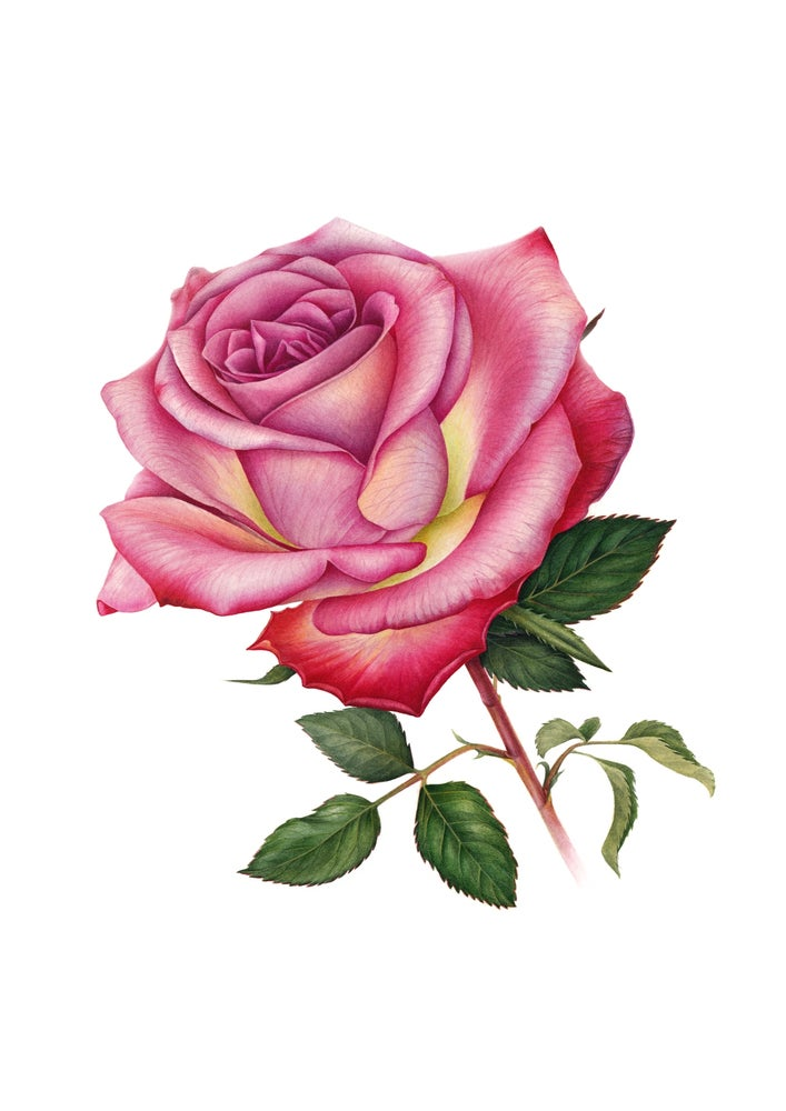"""Memory Lane"". Fine art print of a blooming rose watercolor painting."