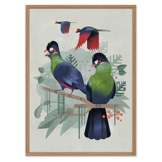 Image of Turaco
