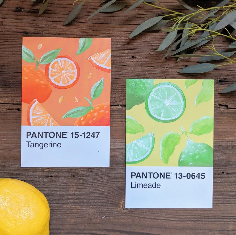 Image of Citrus postcard painting