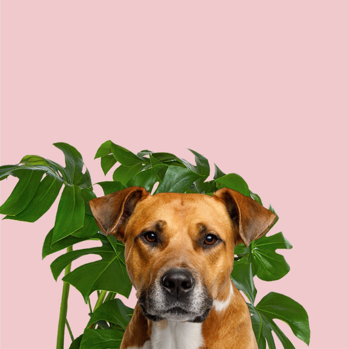 Image of Gift a mystery plant and feed a homeless dog