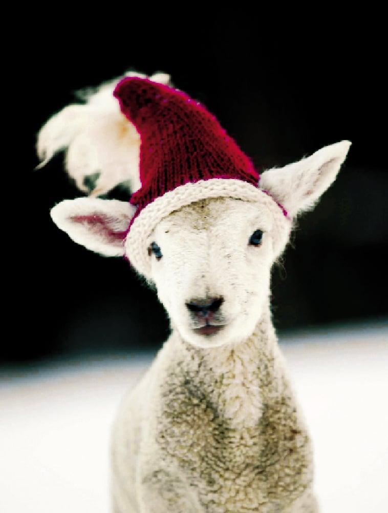Image of Notecards - Santa Lamb - Set of 10 - FREE SHIPPING
