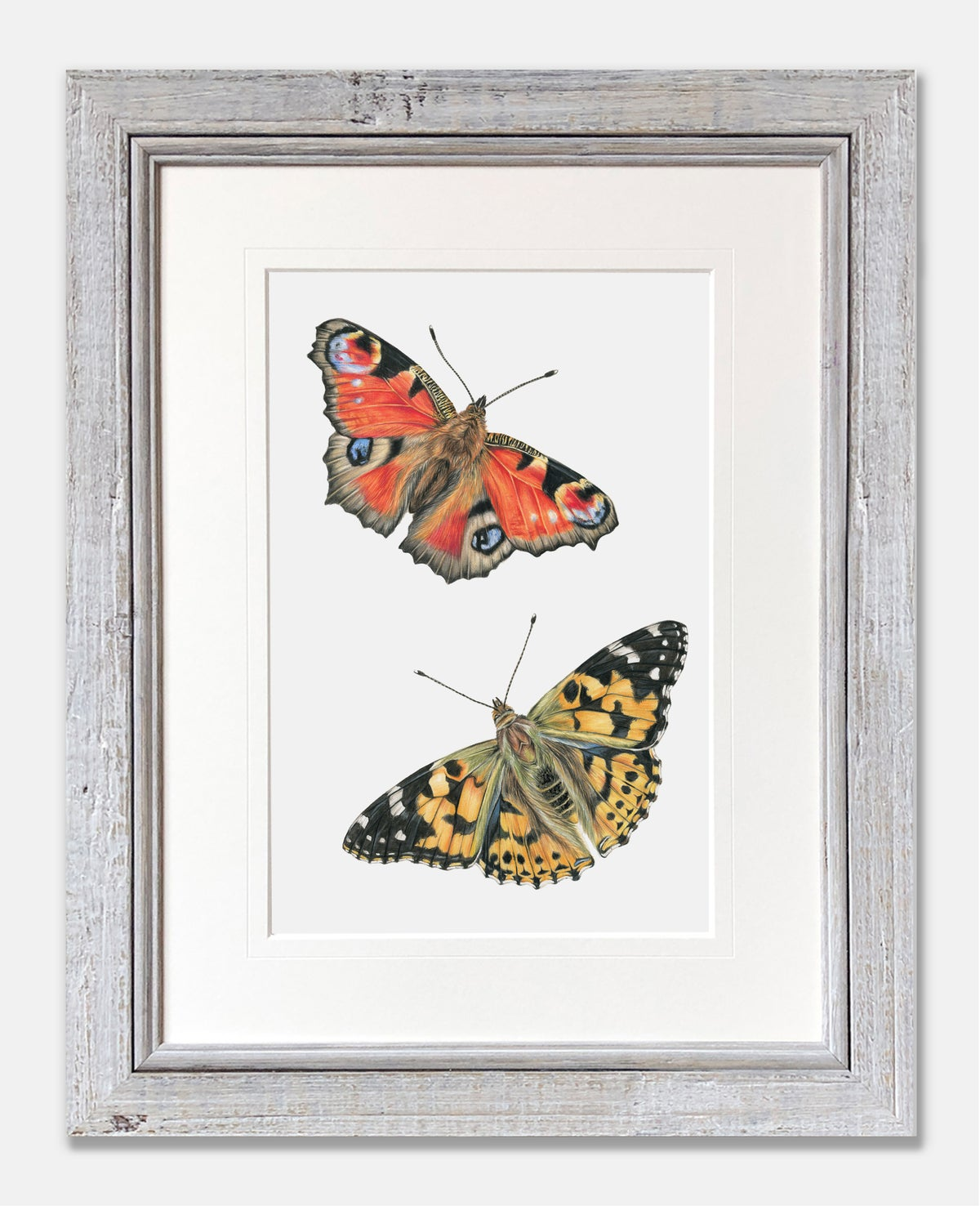 Image of Peacock & Painted Lady Butterflies - Limited Edition Print