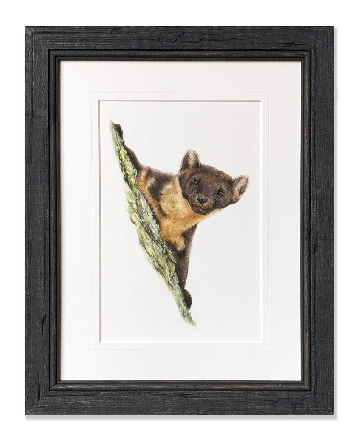 Image of Pine Marten - Limited Edition Print