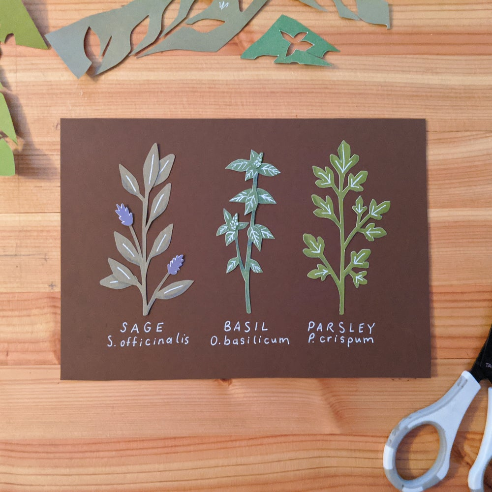 Image of Cut paper herbs