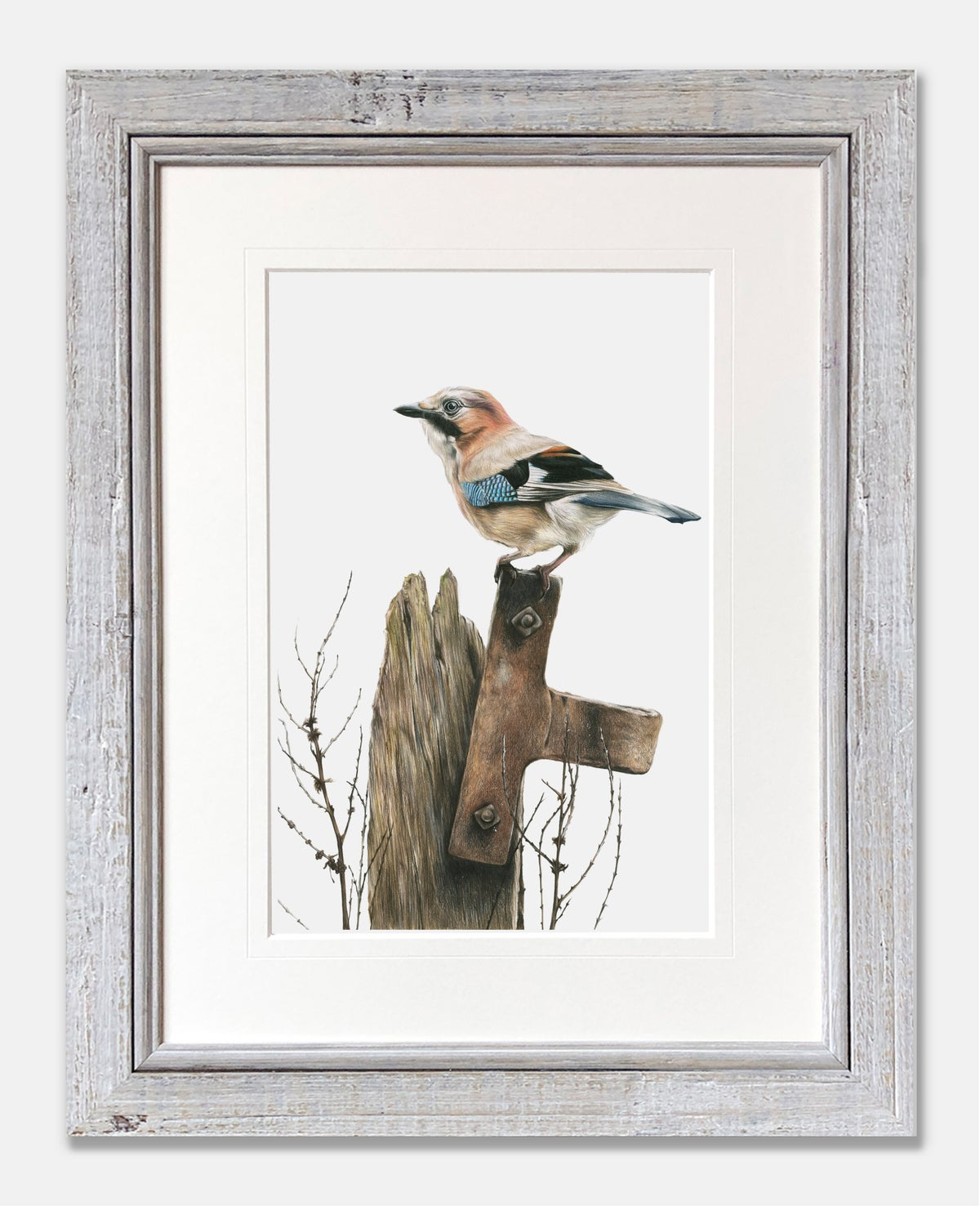 Image of 'Jay' Limited Edition Print