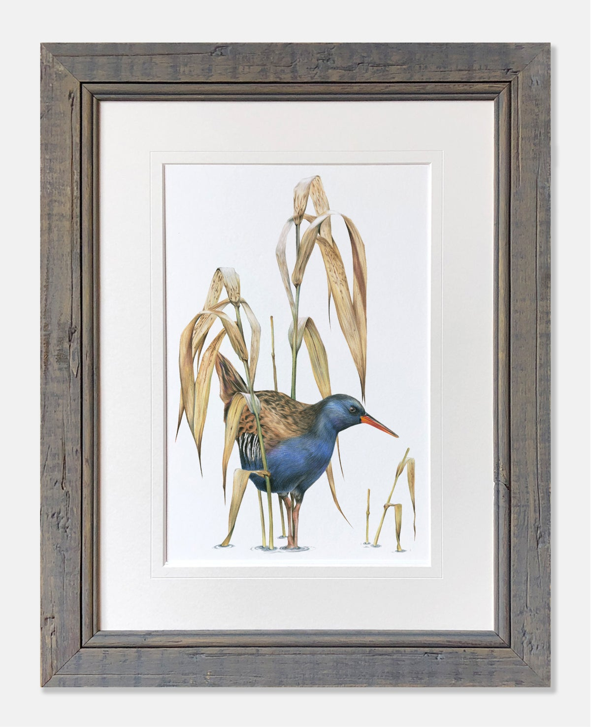 Image of Waterrail - Limited Edition Print