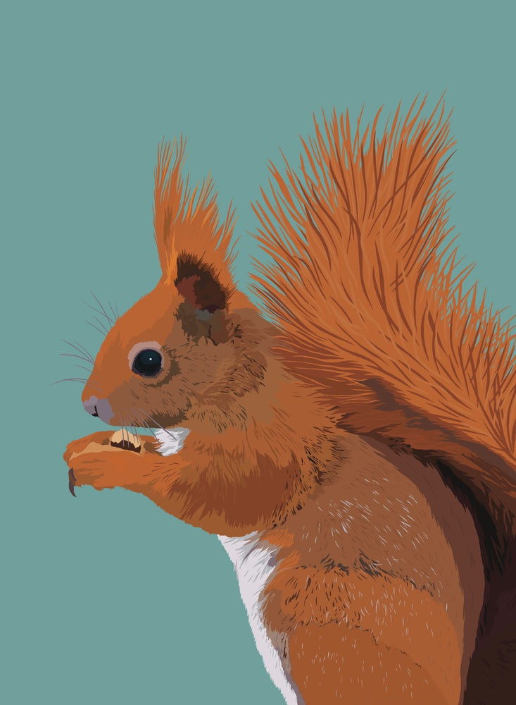 Image of Red Squirrel Tea Towel
