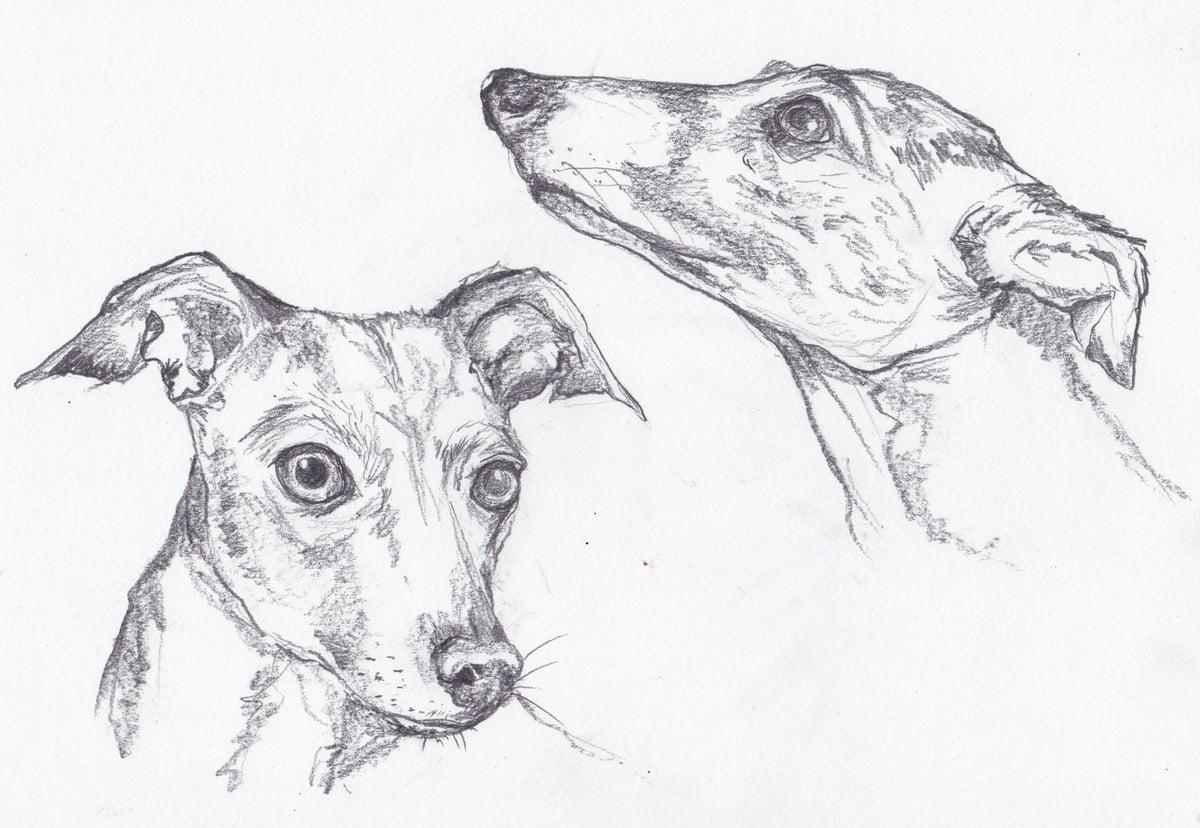 Animal Portrait Commission