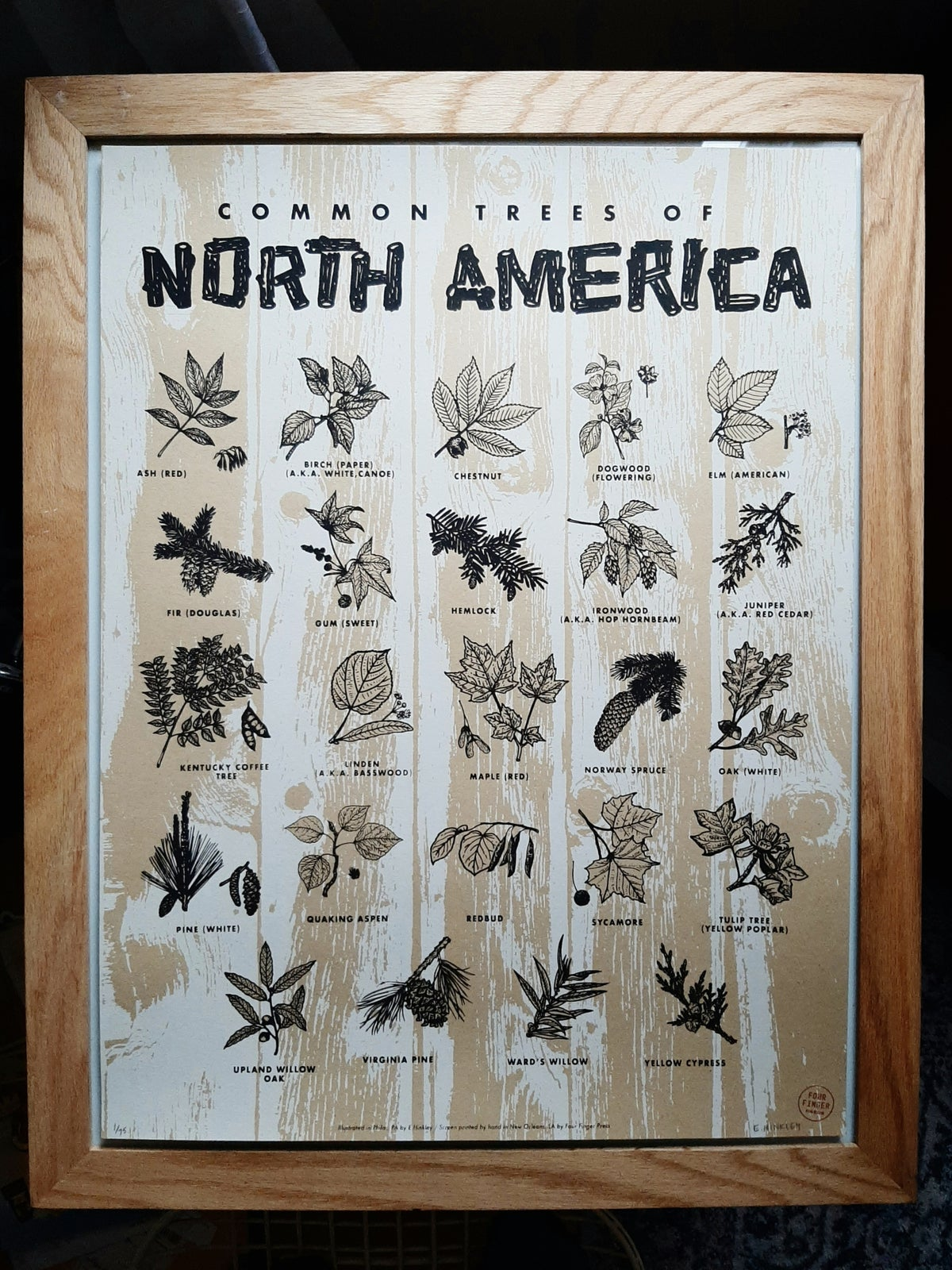 Image of Common Trees of North America