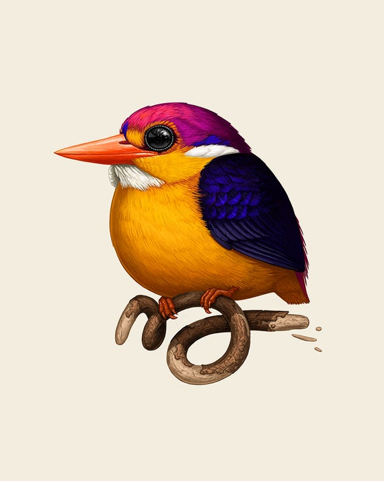 Image of  Rufous-backed Dwarf-Kingfisher