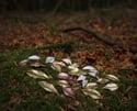Silver Dryad leaf earrings