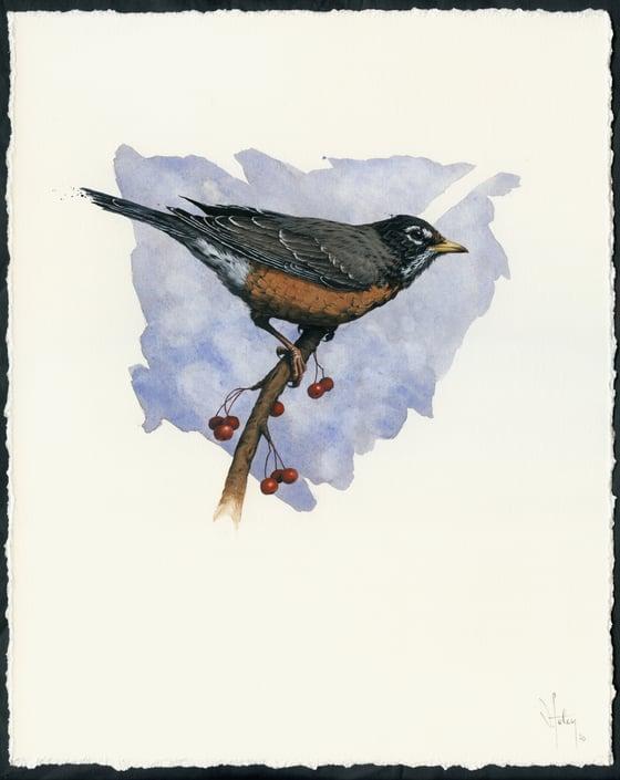 Image of American Robin (American Songbird Series, Nov 2020)