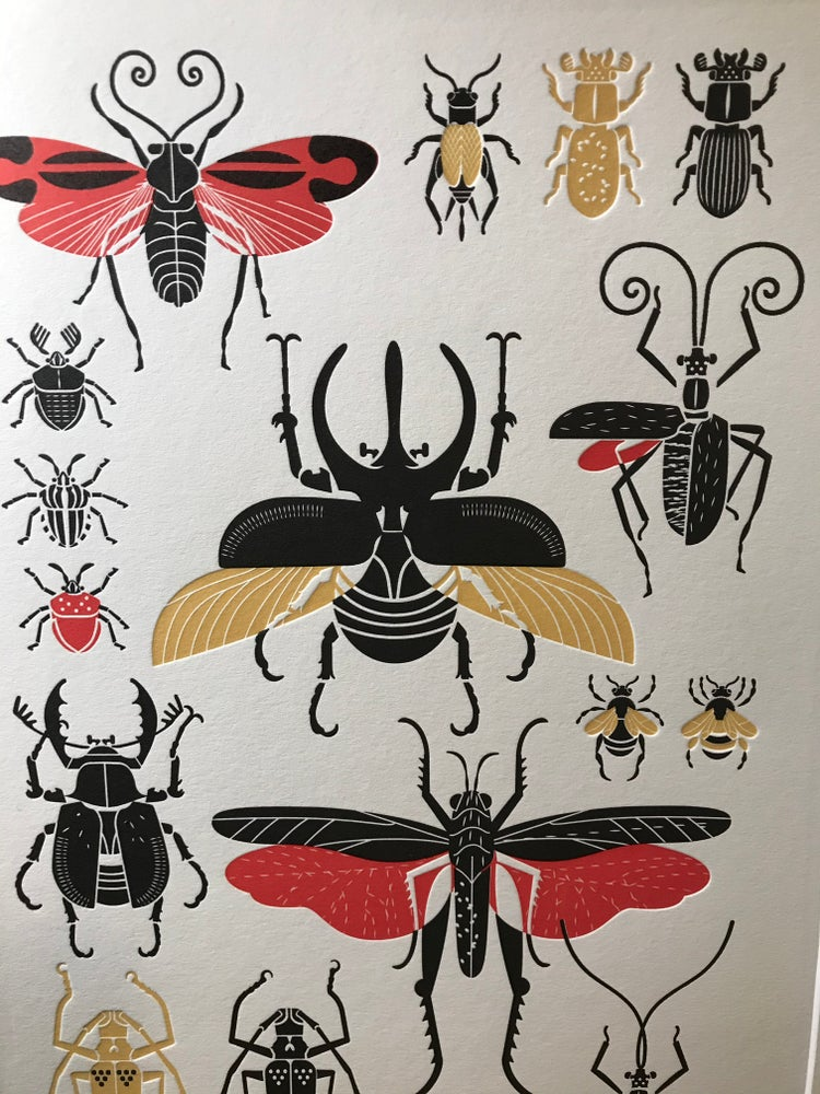Image of Planche d'insectes