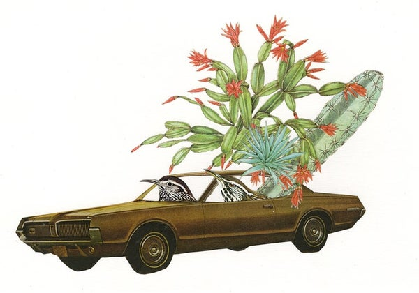 Image of Cougar driving cactus wrens. Limited edition collage print.