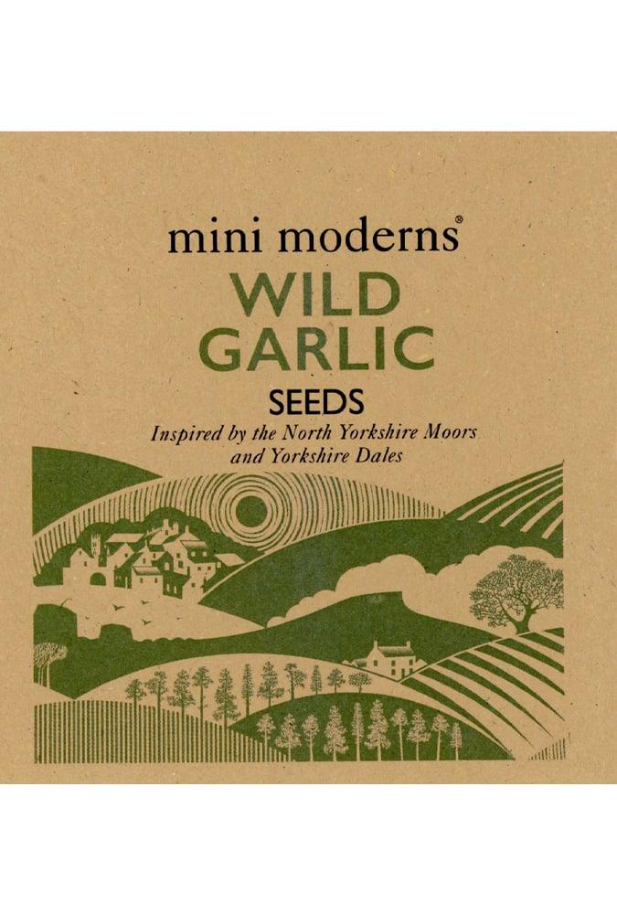 Image of WILD GARLIC SEEDS