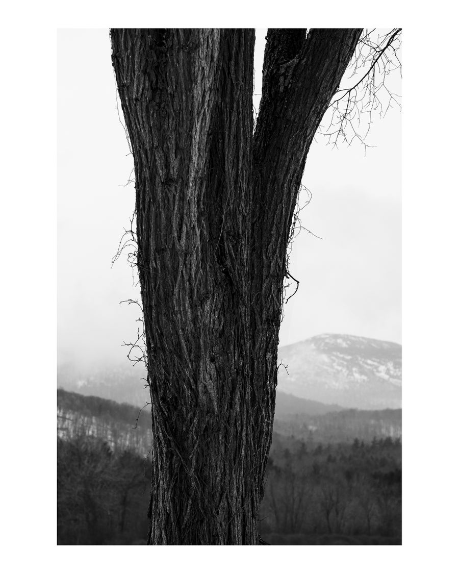 """Image of 24x36"""" Archival Print (B&W) + Signed Book"""