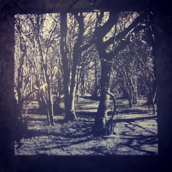 Image of Black Metal Forest Canvas