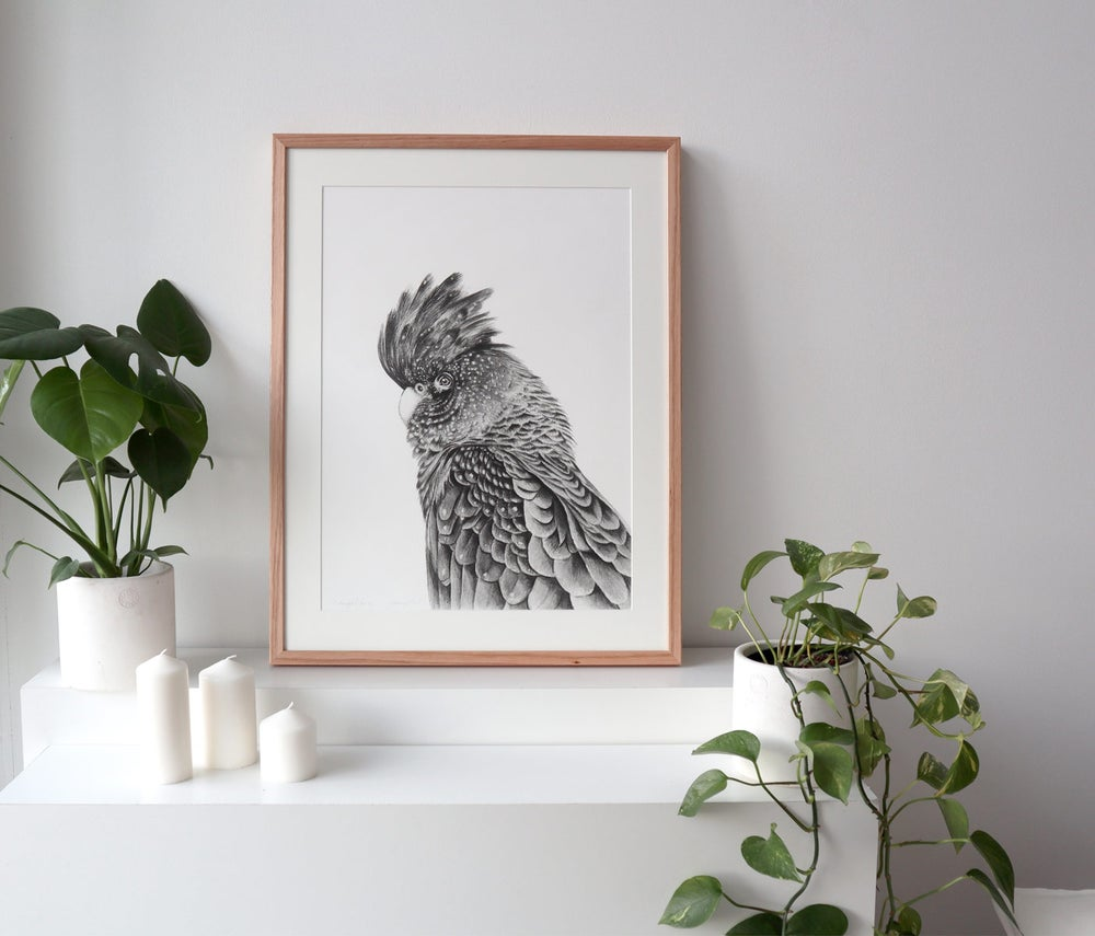 Image of 'A Meaningful Few' Black Cockatoo