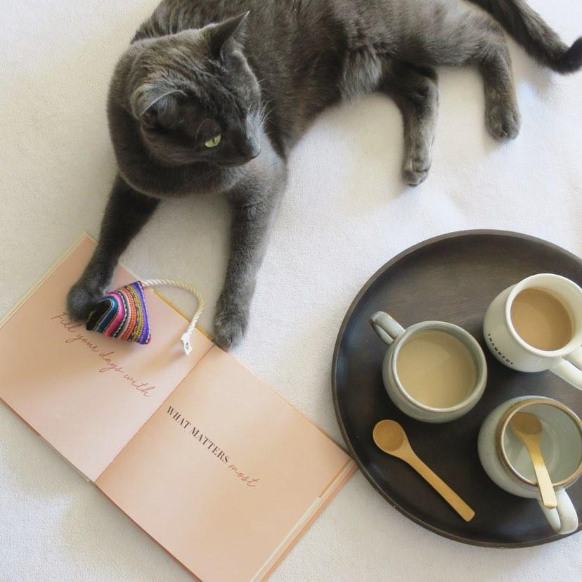 Image of Meow-tcha Tea