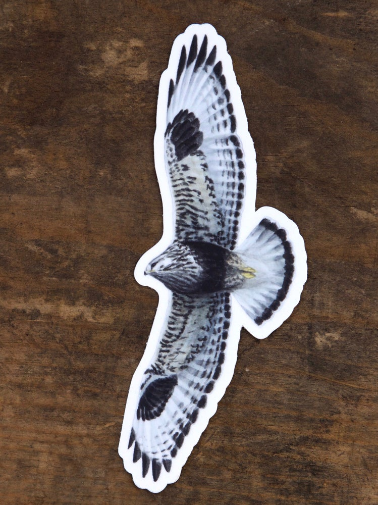 Image of Rough-legged Hawk Sticker
