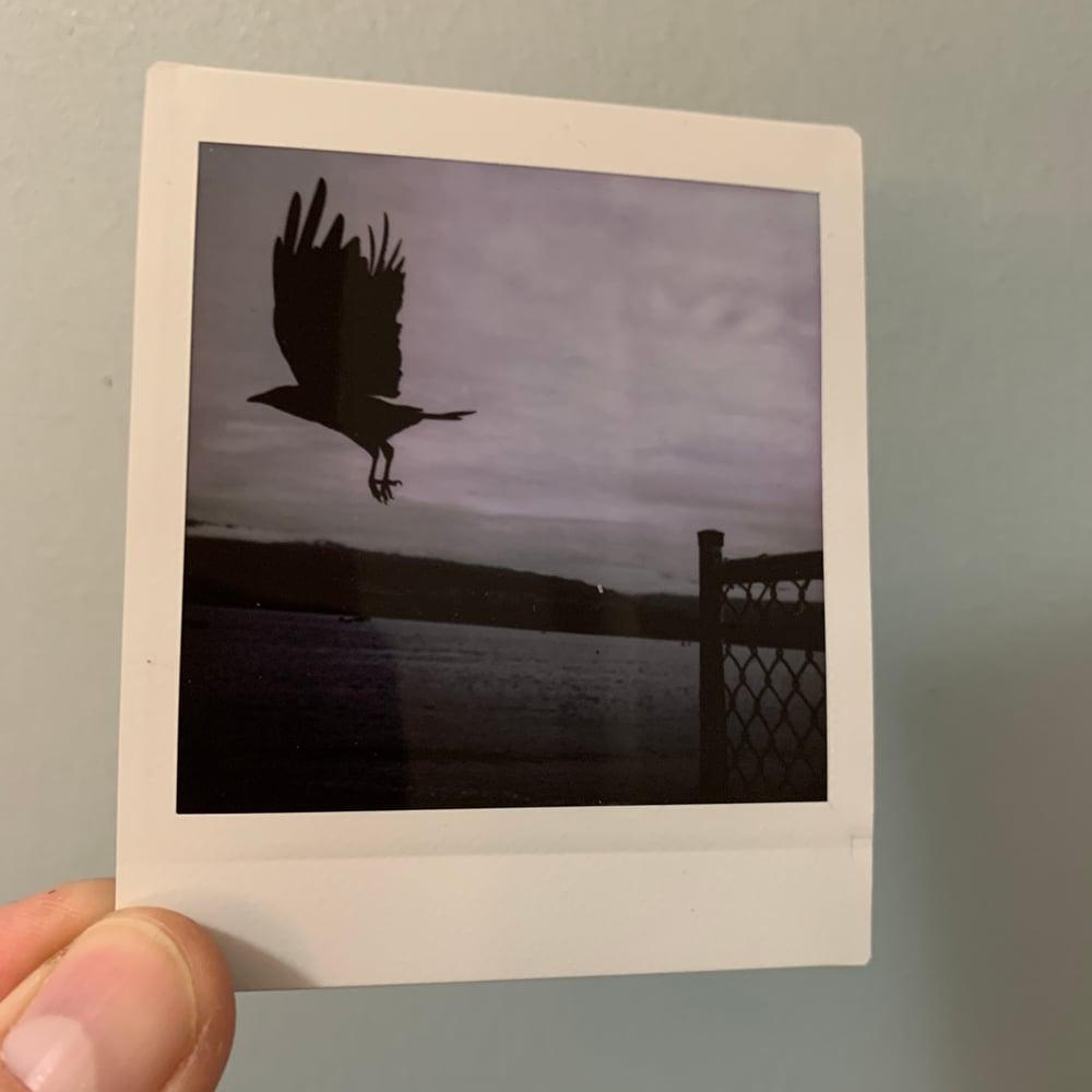 Image of Fence Flight, mini print