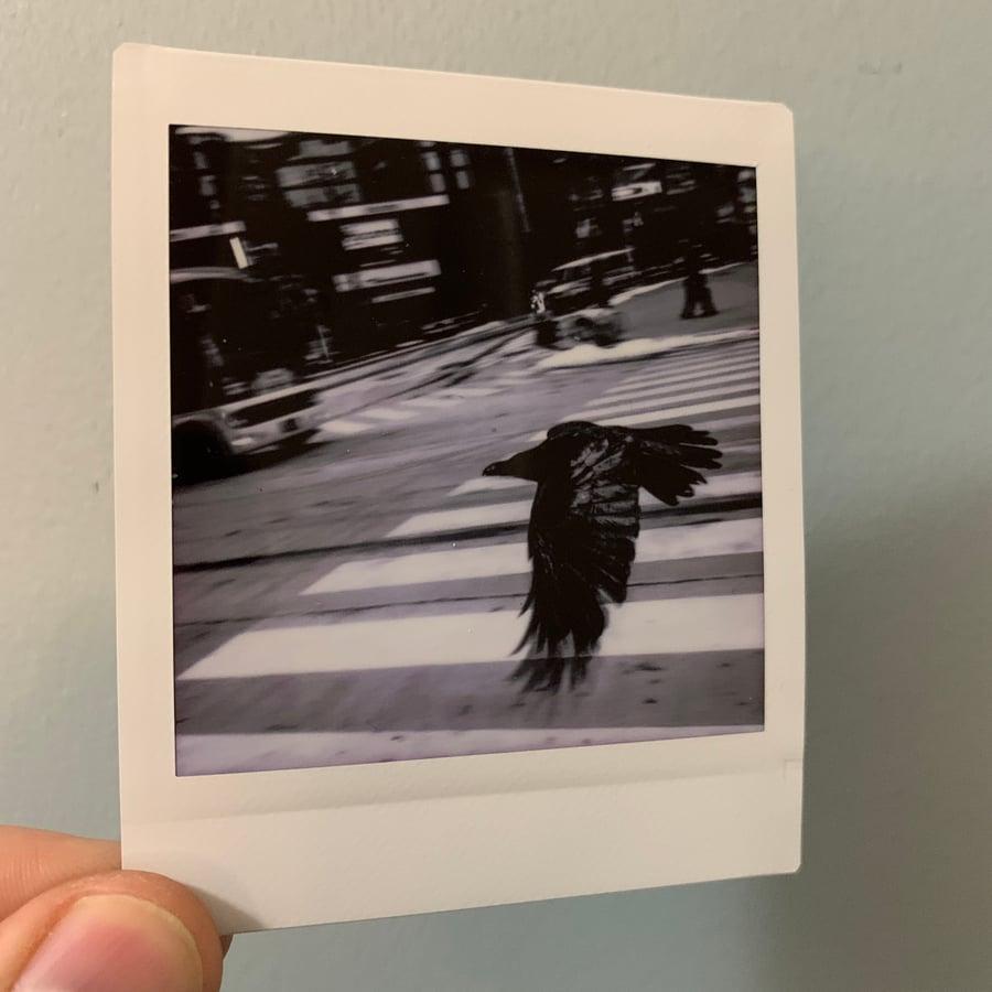 Image of Tokyo Crow, mini print