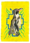 Humboldt Penguin – A4 Print