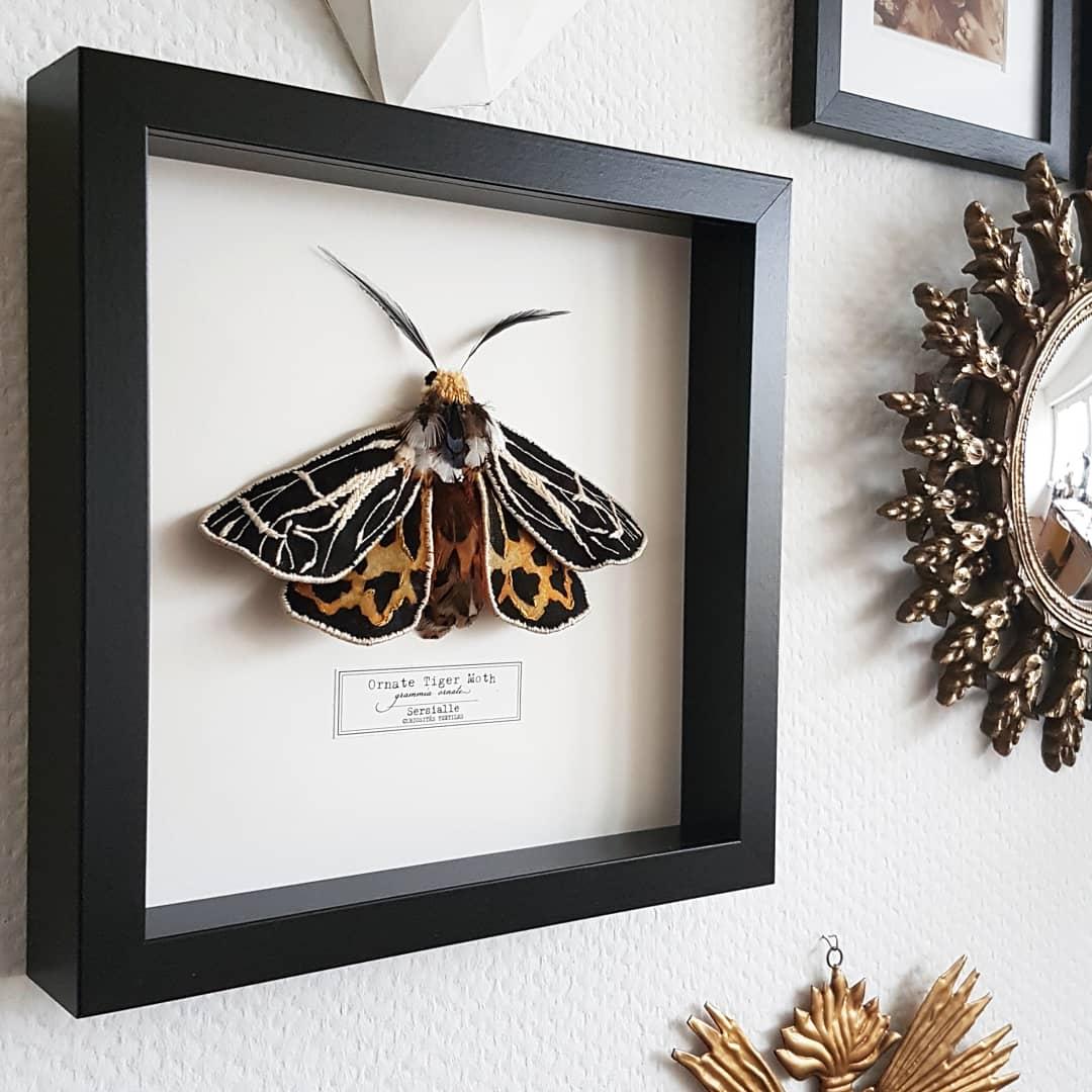 Image of Ornate Tiger Moth