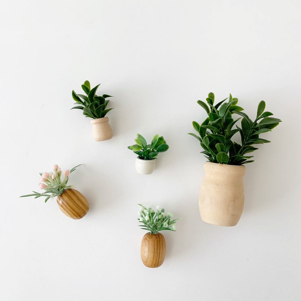 Image of Mini house plants