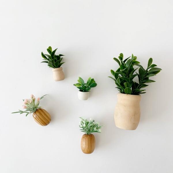 Image of Mini house plants