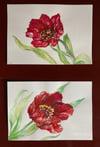 Red Tulip I