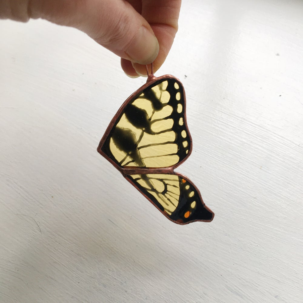 Image of Swallowtail Butterfly Wings