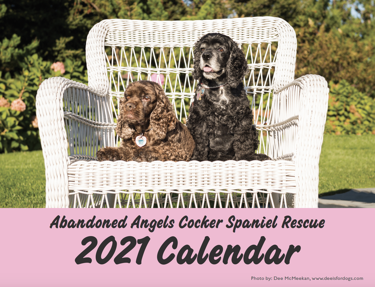 Image of 2021 Abandoned Angels Rescue Calendar