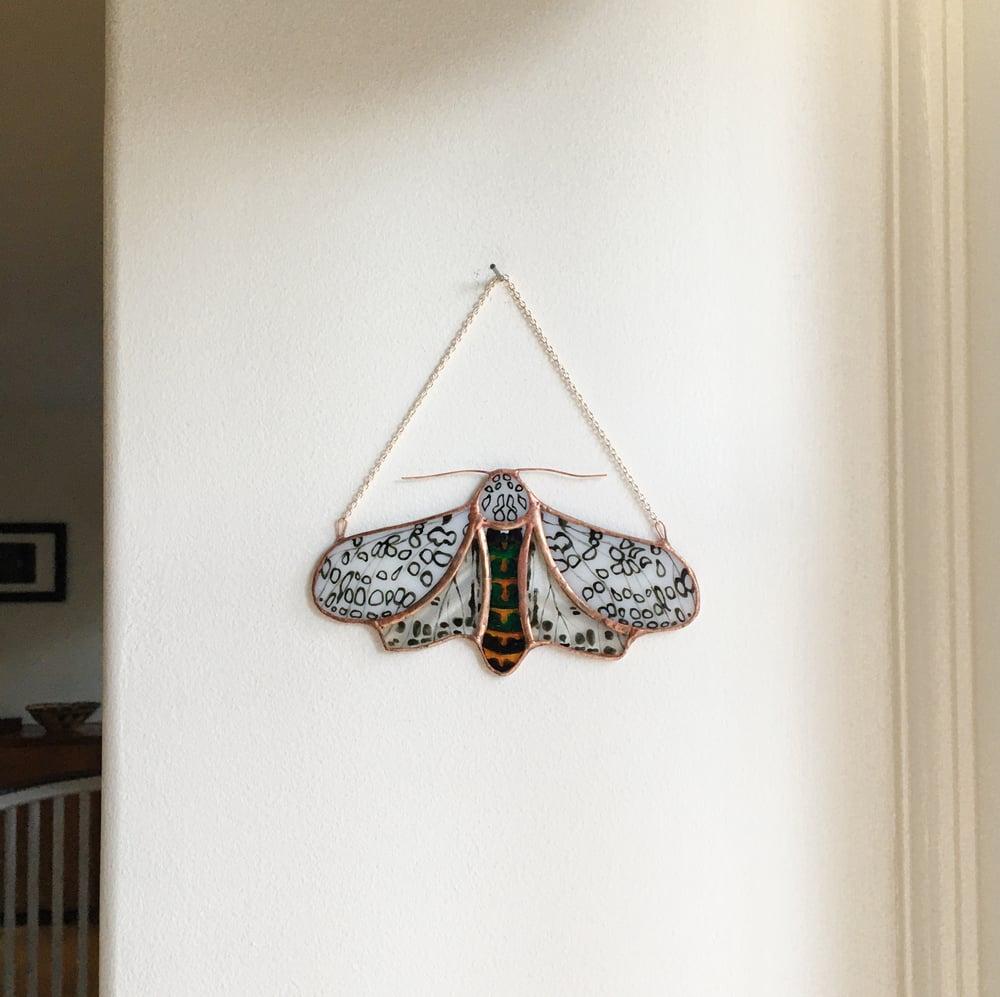 Image of Leopard Moth