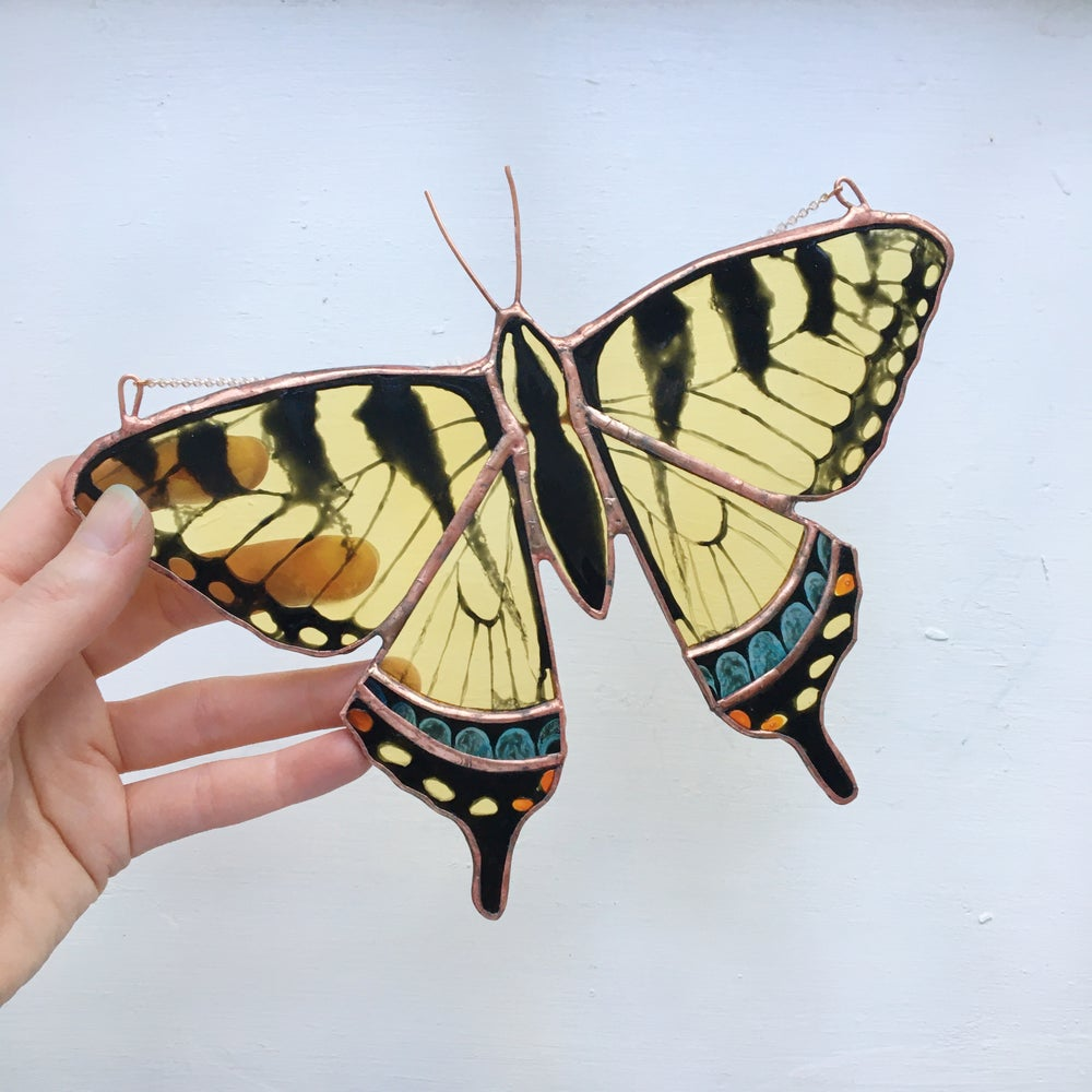 Image of Swallowtail Butterfly