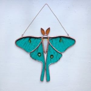 Image of Luna Moth