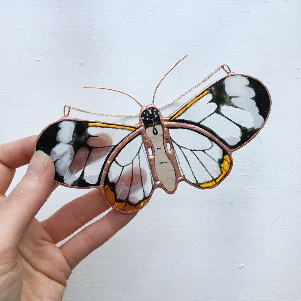 Image of Ghostwing Butterfly