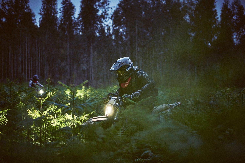 Nighttime Hunting I