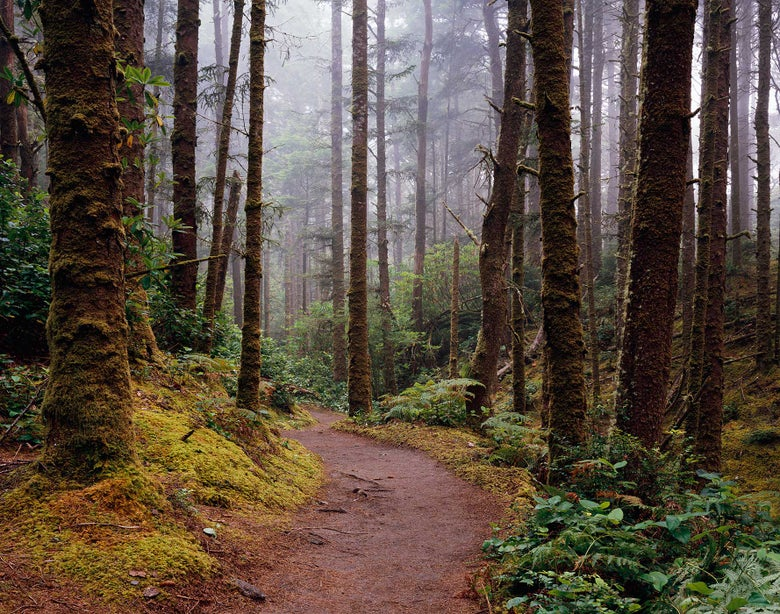 Image of The Hobbit Trail, Siuslaw National Forest, Oregon